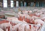 大型養豬場 年出欄5萬頭)對外出售或出租