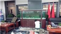 广州有鱼缸清洗公司,有水族店,鱼缸换水消毒,广州鱼缸护理价格