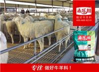 肉羊增肥预混料