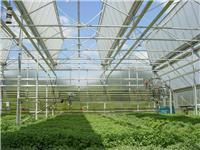 温室自动顶开窗自然通风系统