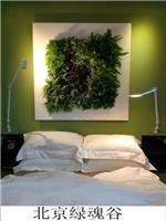 空气净化北京绿魂谷生态植物墙植物壁画