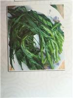 牡丹江当地绿色柳蒿芽刺五加刺老芽 牡丹江厂家速冻山野菜食品 营养有机