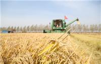 宁安农家水稻稻谷批发厂家 宁安种植基地自产自销水稻 纯天然无添加