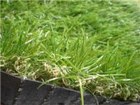 草丝专用抗UV防老化母粒 草丝专用抗老化母粒厂家