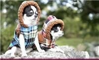清仓少见新品宠物衣服 特厚羊羔绒日系小熊格仔泰迪贵宾小狗衣服 修改 本产品采购属于商业贸易行为