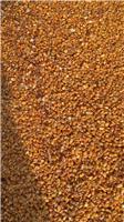 黑龙江青饲玉米供应销售找哪家,黑龙江优质饲料玉米供应销售