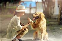 深圳有上门外景拍摄宠物 旧时光摄影*上门拍摄