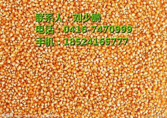 东北玉米加工,东北玉米价格,兴盛粮贸