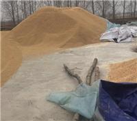 方正自产自销大米水稻 17年新货水稻订购 联系电话
