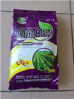 黑龙江大庆优质玉米种子供应销售_大庆大同区玉米种子批发找哪家?