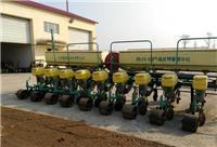 佳木斯市汤原县绿色粮食玉米 新货玉米批发厂家