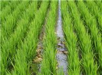密山市水稻哪家品质好
