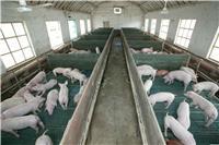 临淄区生猪养殖厂_淄博临淄兴盛生猪养殖专业合作社
