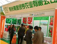 销售印度孟买建材展会 北京金泰