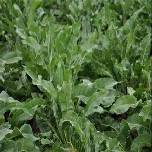 广州价格合理的植物染面料厂家,诚信合作实力雄厚