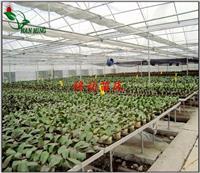 安庆自动温室中药材种植苗床 河北安平汉明育苗设备厂