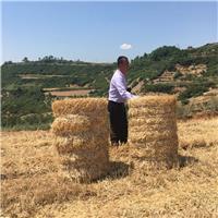 邯鄲青儲收割機廠家 牧草收割粉碎回收機視頻
