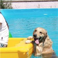 海淀宠物狗狗训练,服务到家