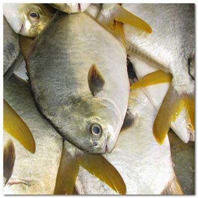冻鱼冻虾进口清关流程/青岛冷冻海鲜进口清关服务代理-青岛睿通