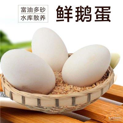 南通生態鵝蛋銷售