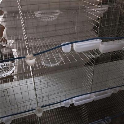 养殖场鸽笼厂家出售三层鸽笼规格齐全