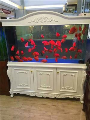 北京赛聚水族*上门清洗鱼缸  观赏鱼护理   鱼缸定做及租赁